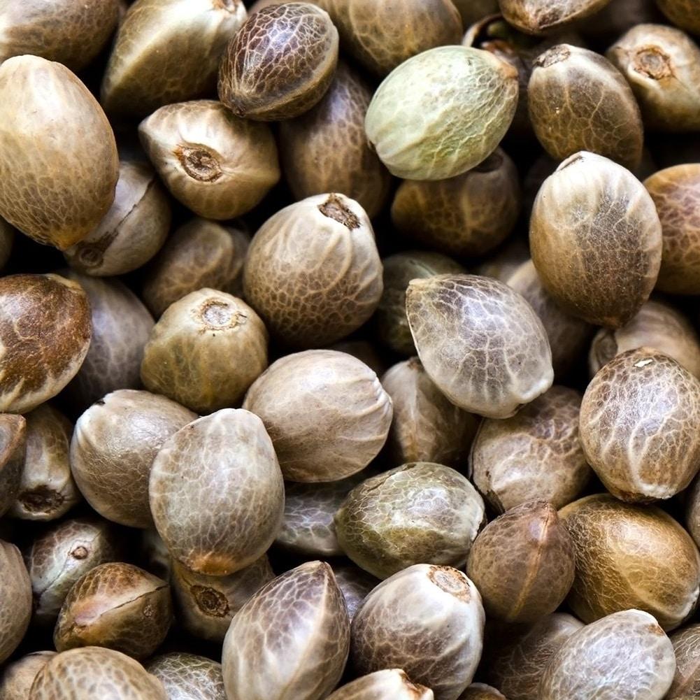 Why use feminized CBD seeds?
