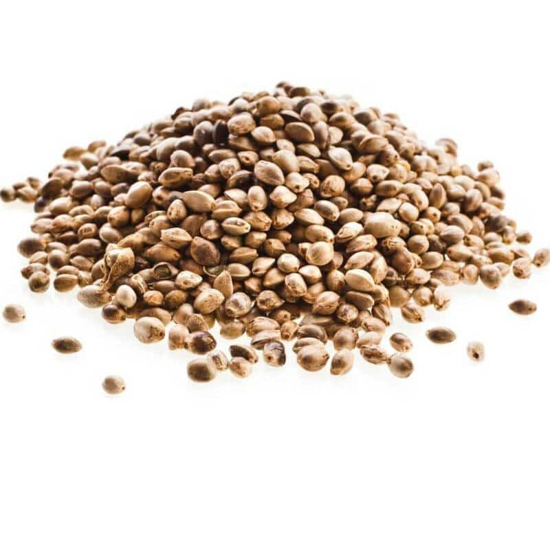 What is the difference between regular and feminized seeds?