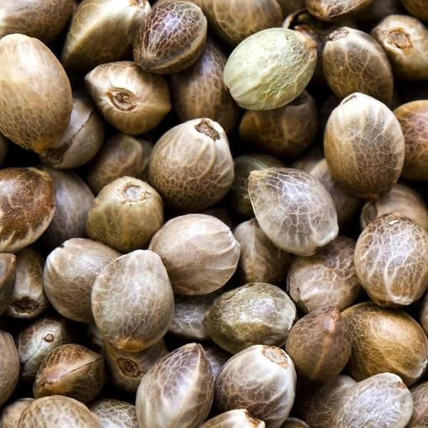 CBG Seeds And Its Benefits